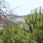 Vacanze Servigliano - Vacanze Monti Sibillini - Vacanze Marche
